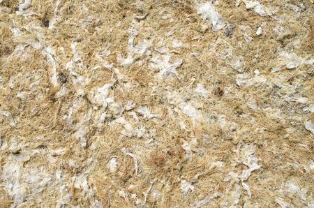 sapless: Dry yellow algae and seaweed on sunny beach
