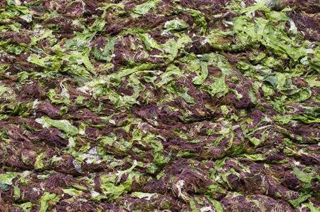 Green algae and seaweed on sunny beach photo