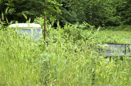 underbrush: Old abandoned overgrown car in meadow