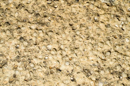 sediment: Sediment rock with fossilized seashells on the beach