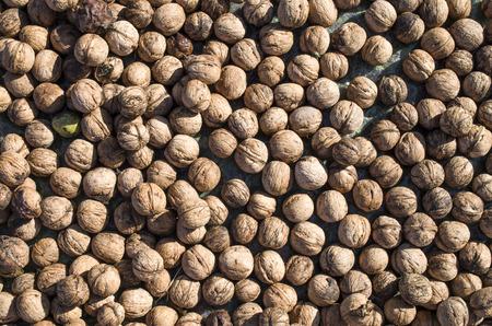 heap: Heap of whole freshly picked walnuts closeup Stock Photo