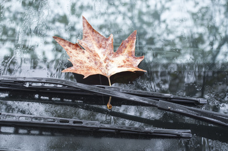 Sycamore leaf on wipers of a car in autumn rainy day