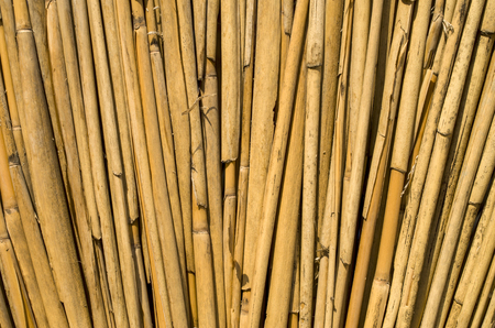 round rods: New cane wall closeup in sunny day Stock Photo