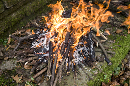 kindling: Bonfire closeup in forest in wimdy day