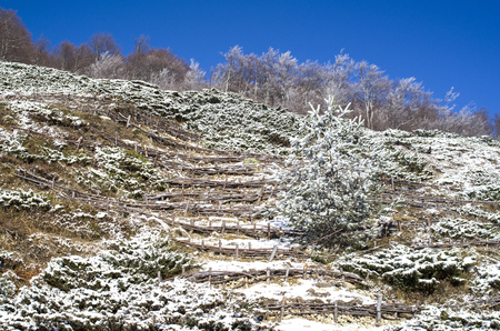 terracing: Wooden hedge to strengthen the slope on hill, Bulgaria , Europe Stock Photo