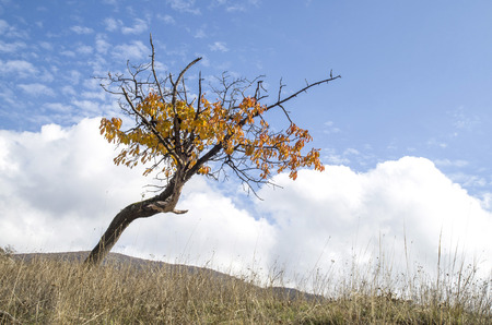Lonely autumn cherry tree in meadow