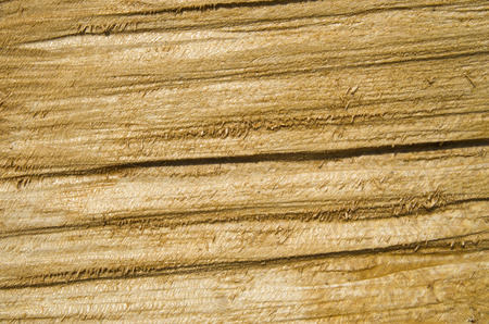treated: Roughly treated lacquered oak plank closeup  in sunny day  Stock Photo