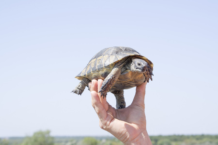Tutle in human hand closeup in the sky
