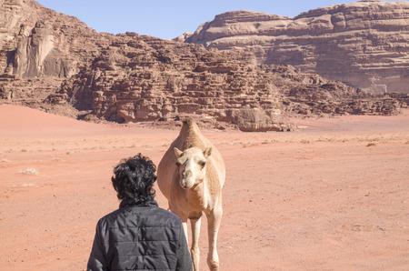 Friendship between Bedouin and wild camel in desert 스톡 콘텐츠