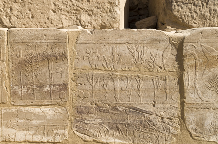 Wall with carved pictorial catalog of the exotic animals and plants from Asia in the Temple of Karnak, Luxor, Egypt,
