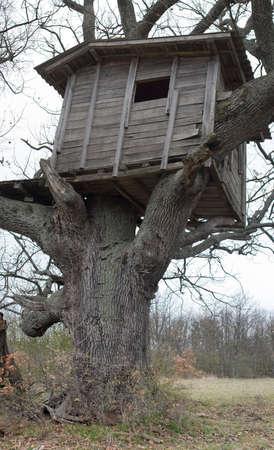 Old wooden house on oak tree in meadow