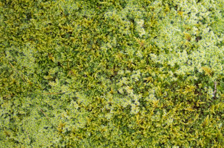 Different types of moss close up in forest