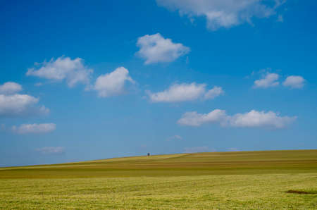 Spring wheat in an endless field and blue sky with clouds Banque d'images