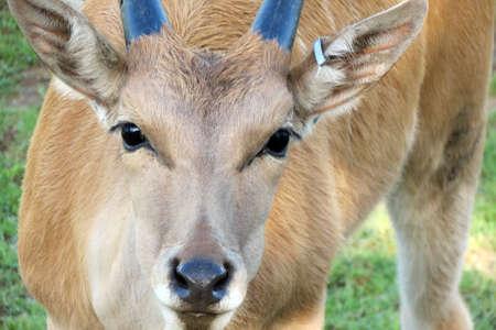 鹿をクローズ アップ 写真素材
