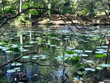 Beautiful untouched nature with a lake at the Pointe-?-Pierre Wild Fowl Trust (offers environmental education & the conservation of wetlands & waterfowl within the Petrotrin oil refinery) in Trinidad 免版税图像