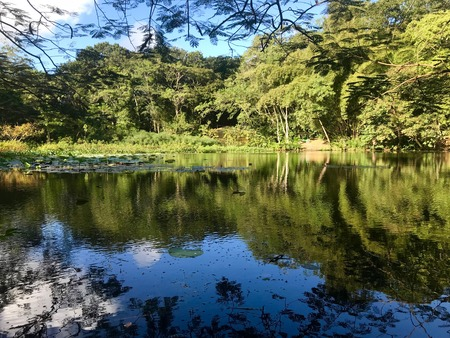 Beautiful untouched nature with a lake at the Pointe-a-Pierre Wild Fowl Trust (Providing Environmental Education and Water Conservation within the Petrotrin oil refinery) in Trinidad 版權商用圖片