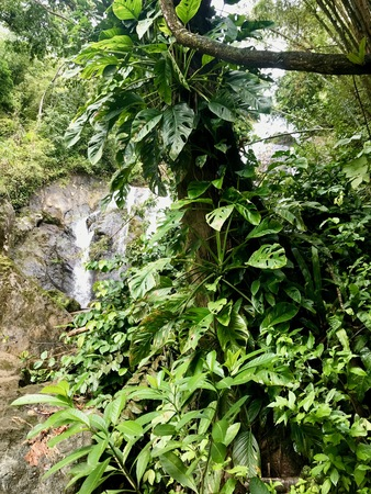 Lush greenery and cascading waterfall