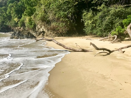 Large piece of driftwood (limb of a tree) at idyllic Pirate's Bay with untouched nature near Charlotteville on the Caribbean island of Trinidad and Tobago