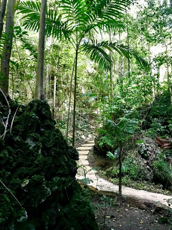Path through untouched lush nature at a gully at Saint Thomas Parish of Barbados (Caribbean Island of the West Indies)