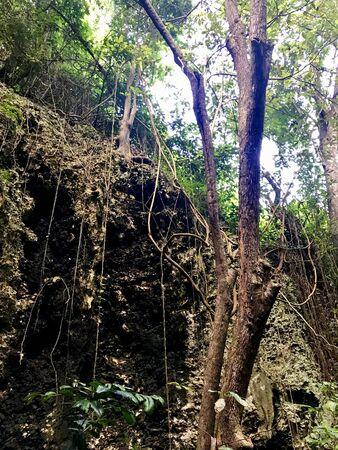 Untouched lush green nature at a gully at Saint Thomas Parish of Barbados (Caribbean Island of the West Indies) 免版税图像