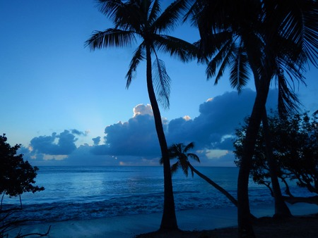 Beautiful idyllic sunset with the ocean, palm trees and a blue sky with dark clouds on the Caribbean island of Martinique