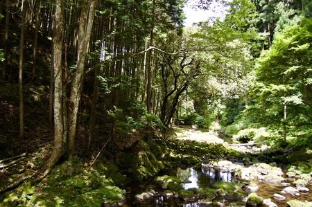 Akame 48 Waterfalls: Mysterious hiking trails, giant trees and rock formations, untouched nature, lush vegetation, cascading waterfalls and enormous amphibians in rural Japan close to Osaka and Kyoto Фото со стока