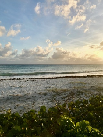 Panoramic view of the idyllic beach in Oistins, Barbados (Caribbean island) with small green plants, white sand and the picturesque turquoise ocean with waves