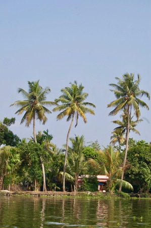 Island in the scenic backwaters in Kerala (India) with tropical palm trees, untouched nature, aquatic plants and a waterway leading to Kochi and Alleppey Stock Photo