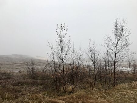 Surreal foggy icelandic autumn landscape: Rural, wild nature on a windy, wed day with yellow grass and tree silhouettes in an untouched area along the Golden Circle route close to a geothermal region