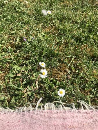Idyllic relaxation & sun bathing outside in the rural country: Pink cotton textile blanket laying on green weed grass with lawn daisy on a summer vacation day