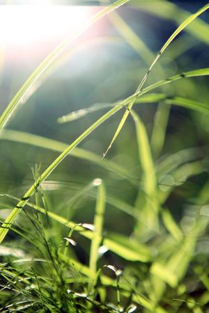 thriving: Grass Stock Photo