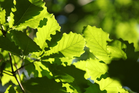 thriving: Tree leaf Stock Photo
