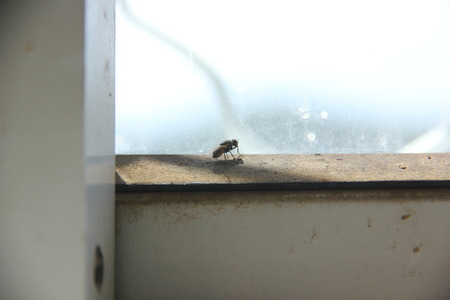 sunshine insect: fly on the window