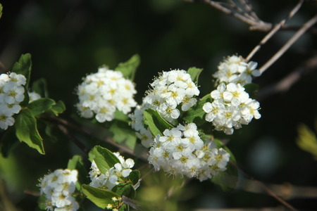 blown away: Dandelion