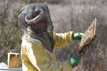 horizontal shot of an italian beekeeper checking his beehives Banco de Imagens
