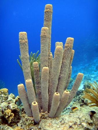Purple tube sponges Stock Photo