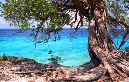 tropical tree at shore