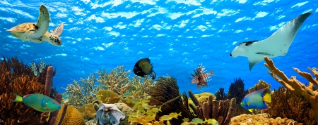 sea turtle: tropical underwater sea life panorama Stock Photo