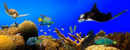 bonaire: tropical underwater sea life panorama Stock Photo