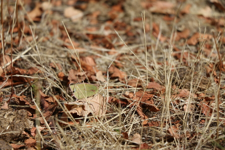 litter: Autumn in the leaf litter Stock Photo