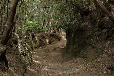 Ścieżka zmysłów w parku wiejskim Anaga na wyspie Teneryfa na Wyspach Kanaryjskich