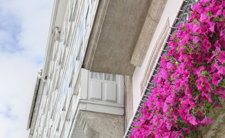 Typical Galician galerias, white enclosed balconies made of wood and glass, next to vivid purple flowers and a deep blue sky with clouds in the Betanzos city in Galicia, Spain