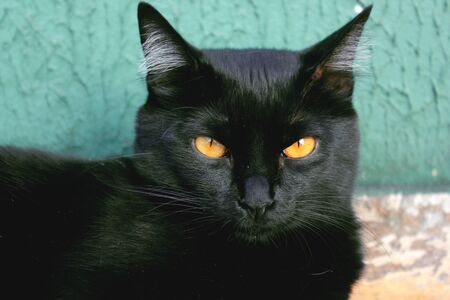 Black cat with yellow eyes resting against a green wall