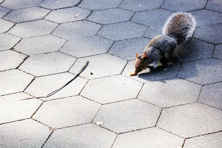 Squirrel in a park in New York City 写真素材