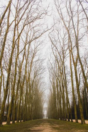Naked trees in the winter in the city of Versailles, France