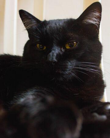 Black cat with yellow eyes sleeping