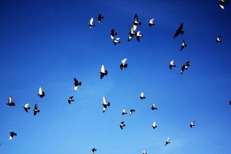 Birds flying against blue sky