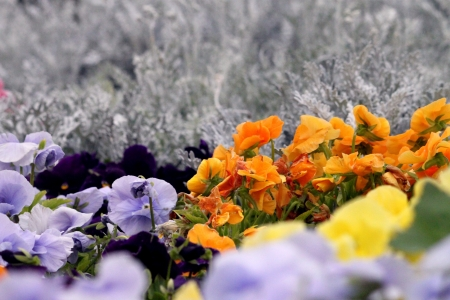 Groups of flowers in the garden photo