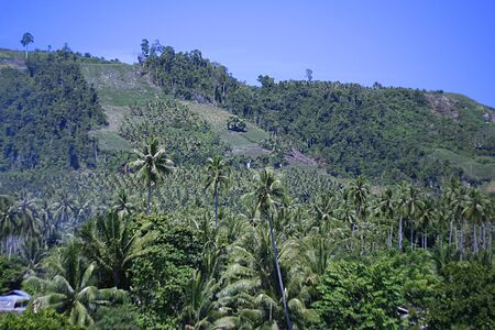 RETAIL OF COCONUT TREES WITH MOUNTAIN BACKGROUND 写真素材 - 129149142