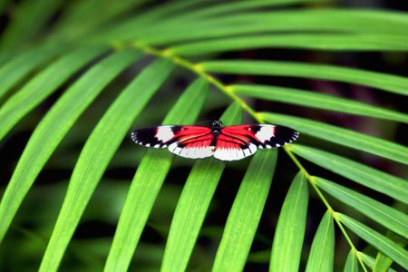 Butterfly on a palm leaf
